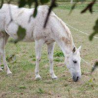 Fotosession Oktober 2016: Pferde